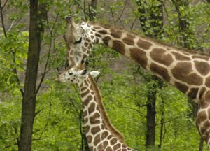 Zoo_Bronx